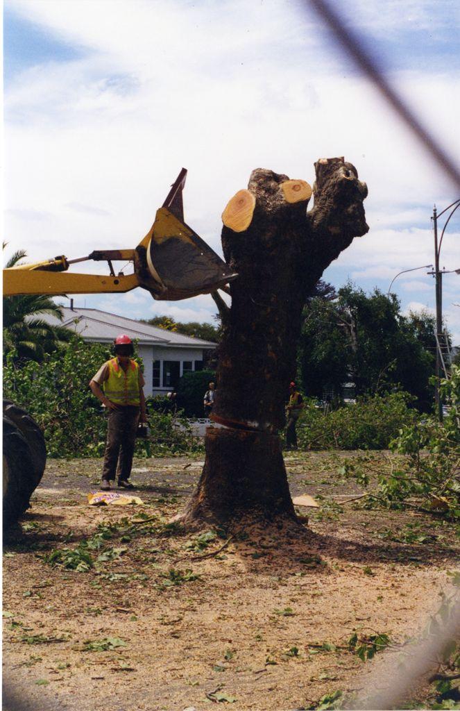 Avenue Action - tree stump
