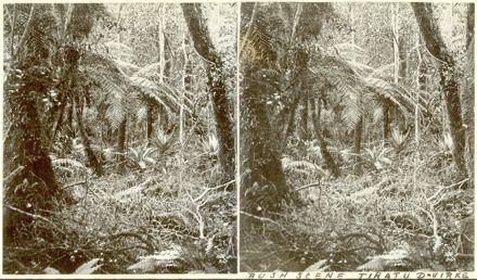 Bush Scene, Tiratu, Dannevirke